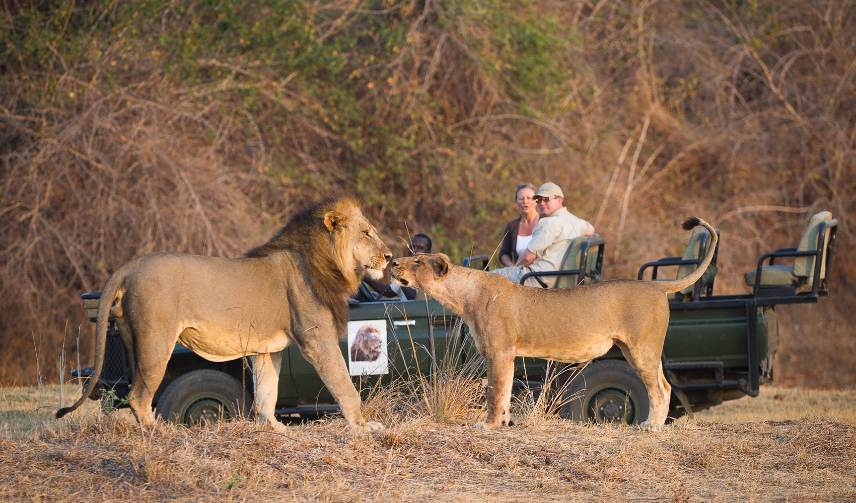 Lion_Camp_re-opens