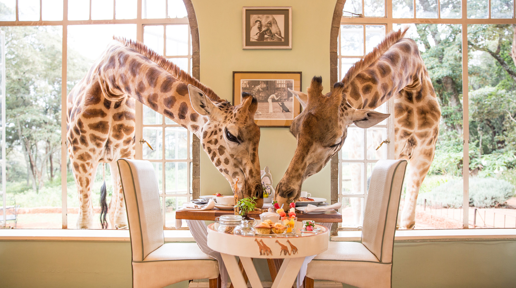 Giraffe_Manor_Refurb