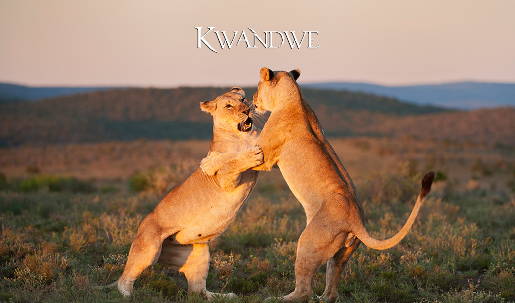 Kwandwe_Last_Minute_Getaway-Specials-Product-Page