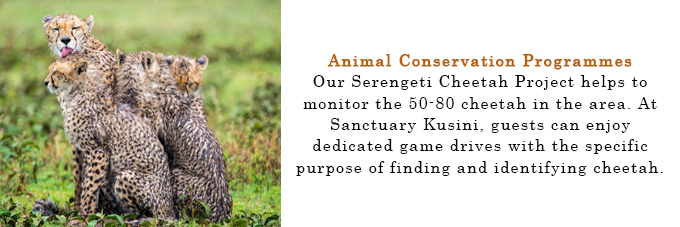 Sanctuary_Animal_Conservation