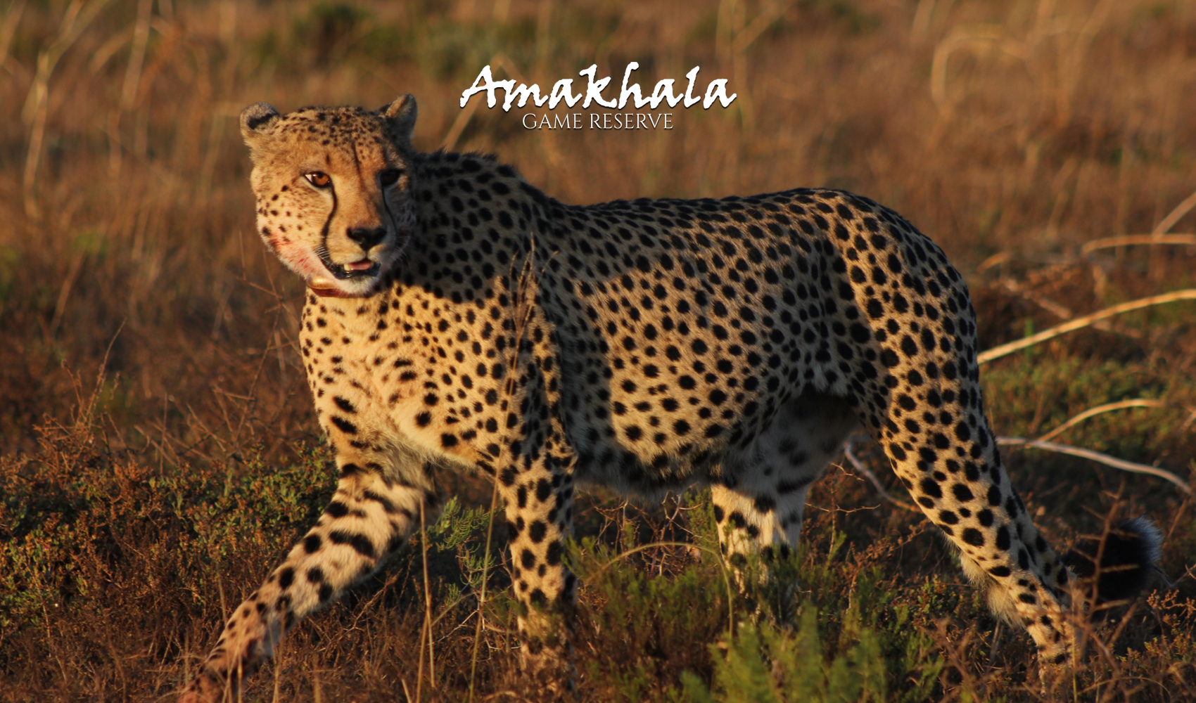 Product-Page_Amakhala-Lodges-Offers